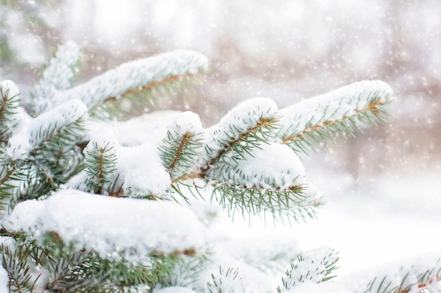 snow-in-pine-tree-1265119_960_720