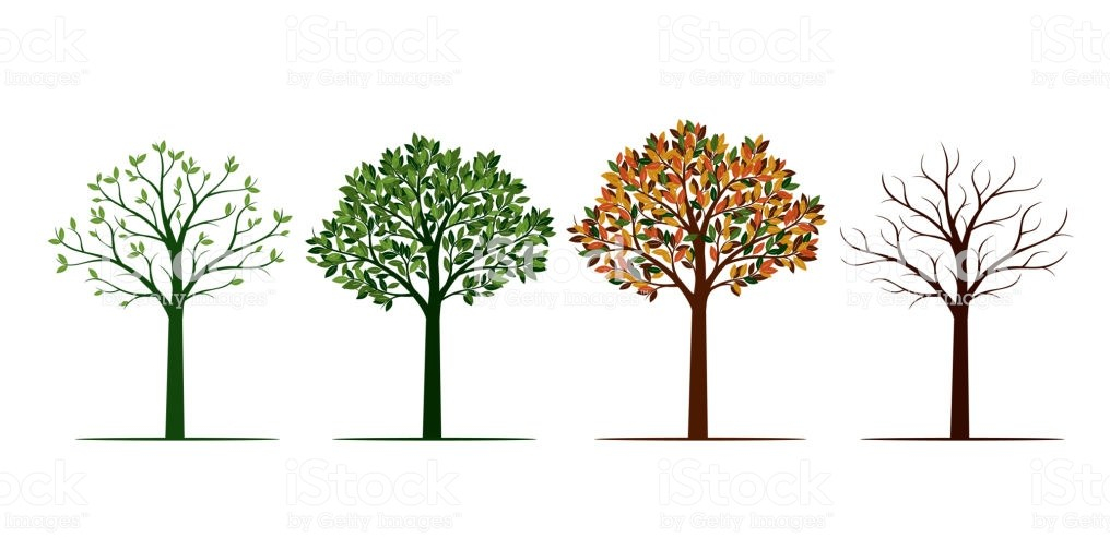 Four Seasons. Group of Trees. Vector Illustration.