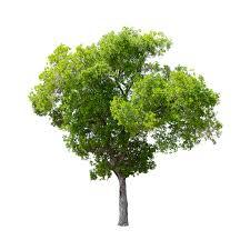 summer tree cutout