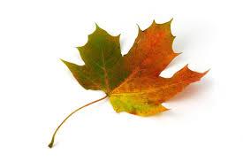 single fall leaf