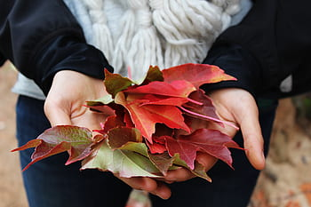 leaves-autumn-fall-hands-nature-royalty-free-thumbnail