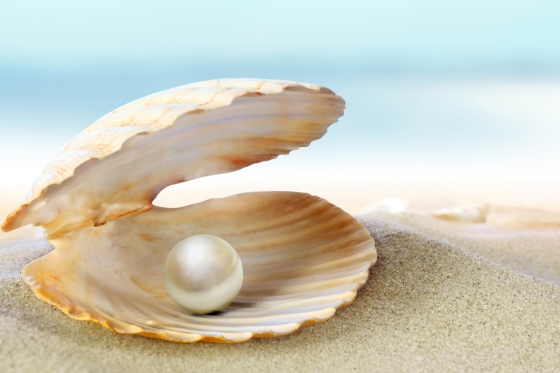 pearl in clam